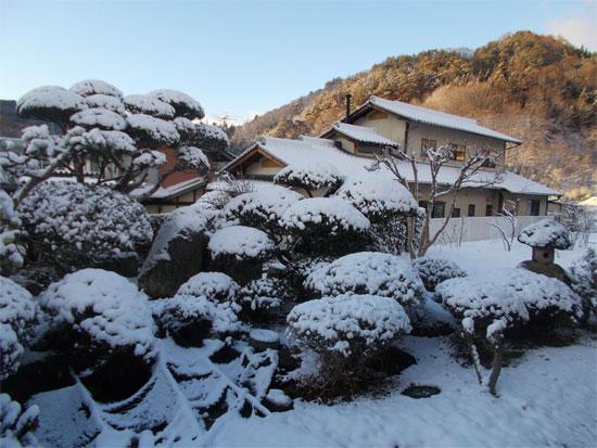庭木の雪景色