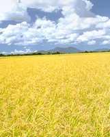 無添加住宅 米のりイメージ